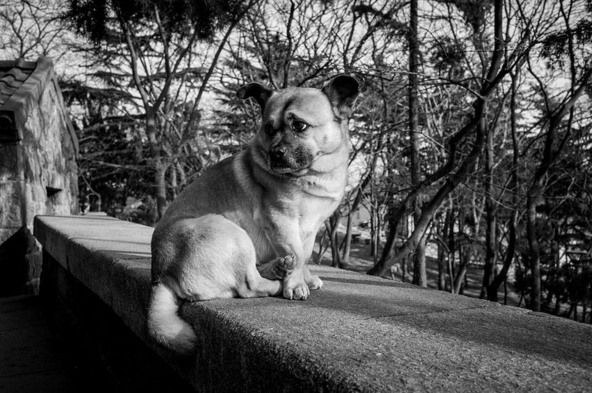 Photo 纪实 Blackandwhite Streetphotography Streetphoto_color Streetphoto_bw Taking Photos Dog