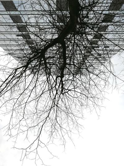 Tree Branch Backgrounds Silhouette Sky