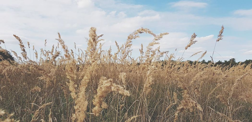 Cereal Plant Rural Scene Agriculture Sky Plant Close-up Landscape Cultivated Land
