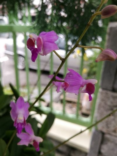 Guppyontree Pink Color Orchid Flower Head Around Home Orchid Close-up Nature Flower The Architect - 2017 EyeEm Awards