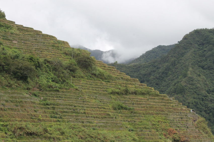 #UNESCO world heritage #Philippines #Hiking #RiceTerraces Majestic Nature Beauty In Nature Green Fields Landscape Mountain Nature Outdoors Rice Terraces Scenics Stairway To The Sky