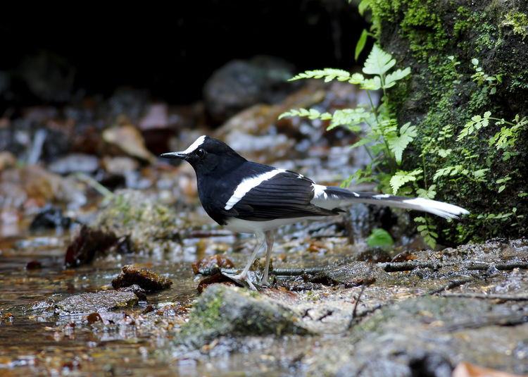 Animal Themes Bird Animal Animal Wildlife Vertebrate Animals In The Wild One Animal Water Nature No People Selective Focus Day Solid Rock Flying Rock - Object Outdoors Side View