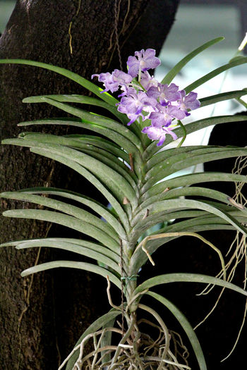Purple Flowers and green Foliage during Spring with abundance in Thailand. Thai Thailand Travel Summer Holiday Orchid Health Healthcare Relax Colorful Recreation  Spring Flower Autumn Morning Pure Nature Abundance Abundant Flower Head Flower Leaf Close-up Plant Green Color Palm Tree Date Palm Tree Herbal Medicine Homeopathic Medicine Cannabis Plant Marijuana - Herbal Cannabis Medical Cannabis