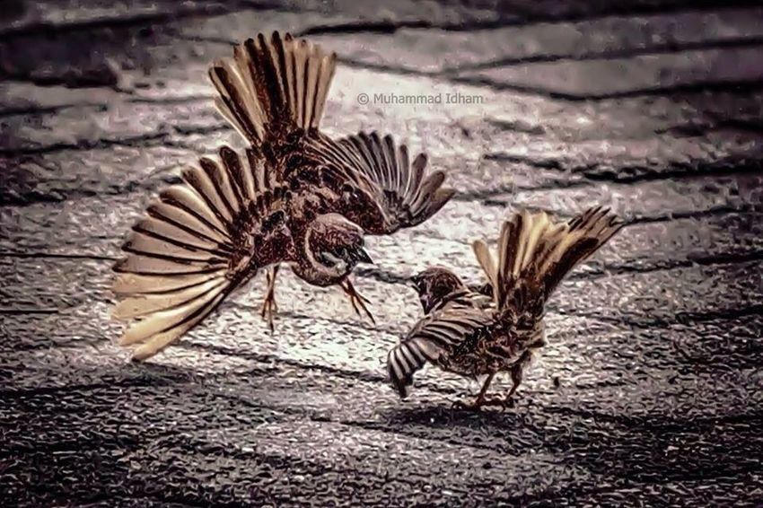 candid: prepare to fight?! ? EyeEm Indonesia EyeEm Best Shots Wildlife Nature_collection