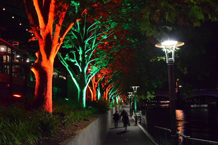 Adapted To The City Cityscapes Footpath Light Lights And Shadows Night Nightphotography Trees Water Waterfront