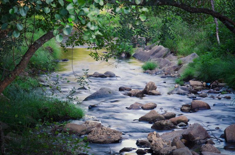 Esta piscina natural fue construida a principios de los años 90 de piedra natural. Dispone de dos zonas, una para niños con poca profundidad y otra con mayor profundidad apta para todos los bañistas. El agua de la piscina está continuamente en movimiento, pues es recogida unos cientos de metros más arriba en el propio río Tormes, y desaguada nuevamente al mismo río. Adventure Cascade Exploration Extremadura Flowing Forest Green Jungle Landscape Lush Foliage Mist National Park Nature Nature, Pentax Rainforest Rock Scenics SPAIN Travel Trees Tropical Vibrant Color Water Waterfall First Eyeem Photo