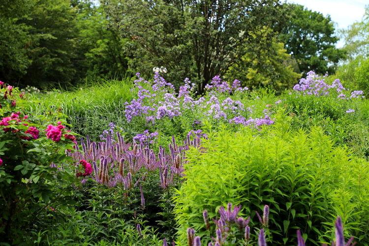 Purple flowering plants in garden