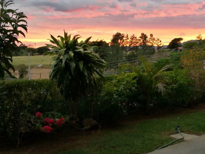 Rural Scene Fgugal Sunset