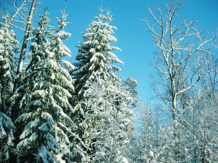 Fairy Winter Tree Clear Sky Branch Cold Temperature Winter Snow Blue Sky Close-up