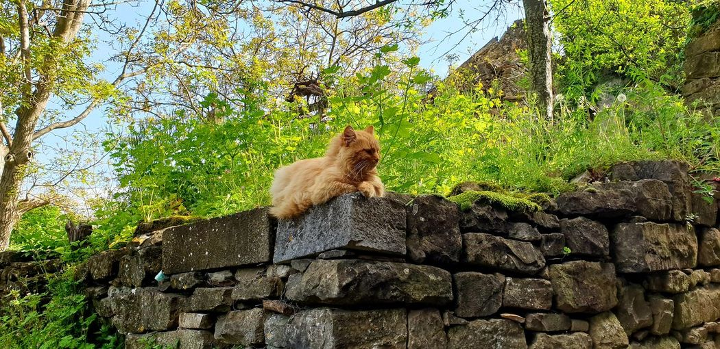 Cat sitting on rock in forest