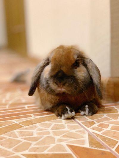 Кролик Квики Bunny  Rabbit Animal Themes Animal Mammal One Animal Indoors  No People Animal Wildlife