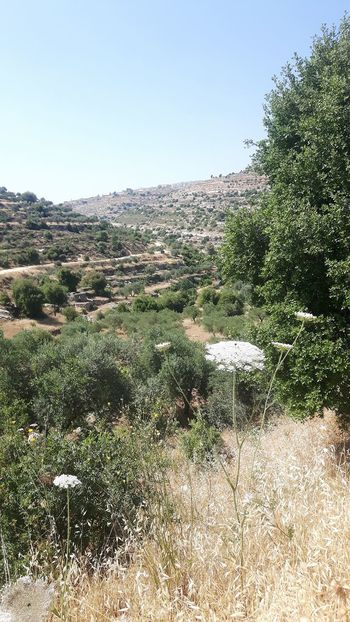 Machrour Valley Palestinian Territory IsraelIsrael Hiking Valley Taking A Stroll Machrout Valley Palestine Palestinian Lavender Color West Bank Lavender Field Bayt Dschalla Beyt jala Beyt Jala Beyt Jalla