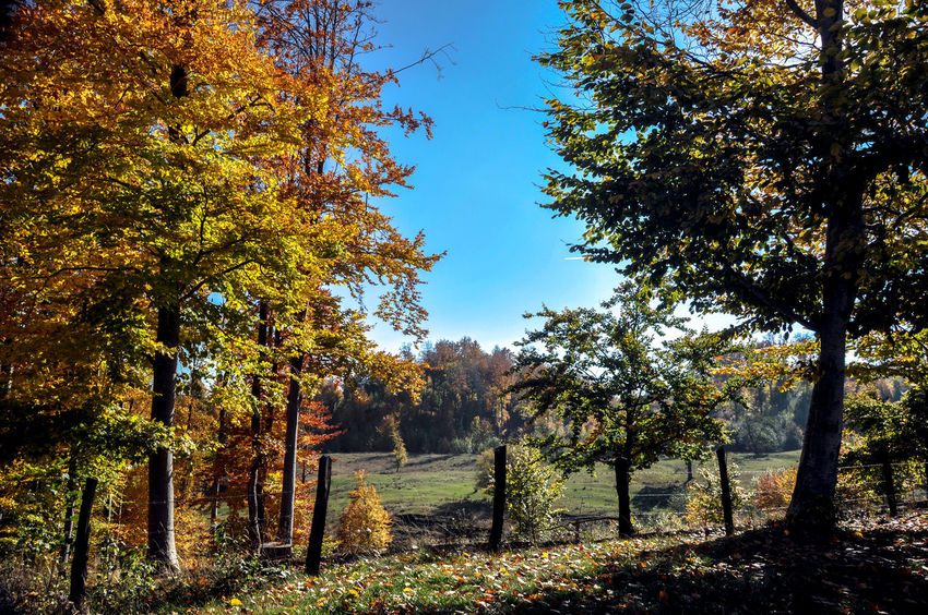 Autumn Collection Autumn Colors Autumn🍁🍁🍁 Foresthills Holidays Relaxing Time Sky_collection The Carpathian Hills