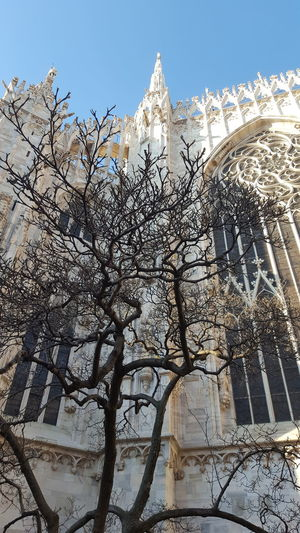 Duomo Duomo Di Milano Tree Fall Blue Sky Italy Milano Tree Religion Sky Architecture