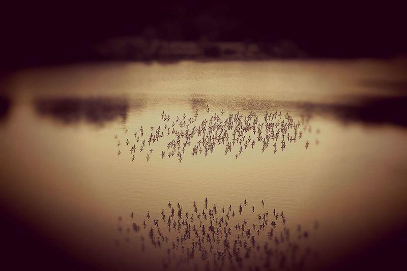 Lake Nature Scenics Beauty In Nature