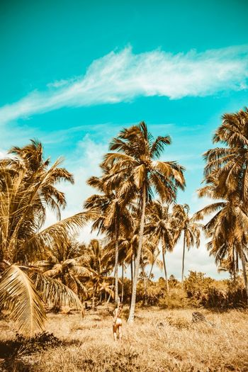 Miracles Moody Sky Moody Sky Coconut Palm Tree Coconut Wallpapers Summer Beach Tree Sky Plant Palm Tree Tropical Climate Cloud - Sky Growth Low Angle View Environment Beach Water Outdoors Day No People Tranquility Tranquil Scene Nature Land Beauty In Nature Scenics - Nature
