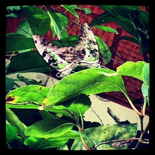 Butterflymix Mixcolors Catch The Moment Blueazul