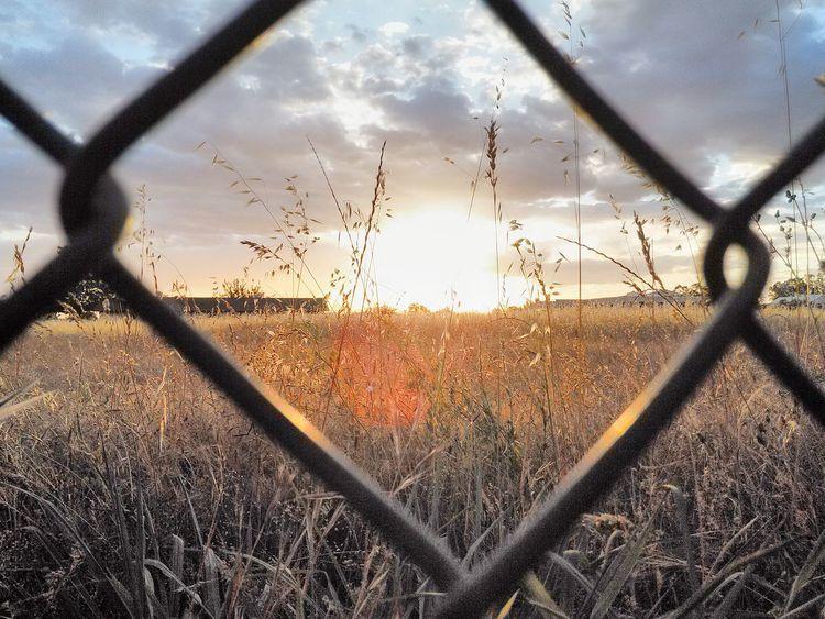 Backyardphotography Throughthefence