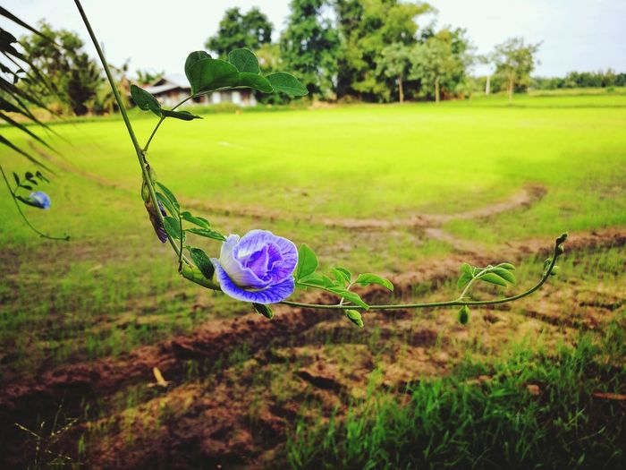 Flower Photography Green Nature Field Rural Scene My Life In Photos