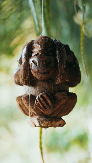 wood monkey