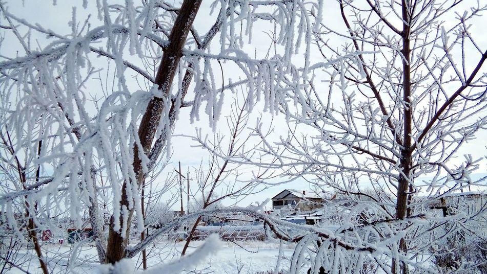 Winter Tree Cold Temperature Nature Snow