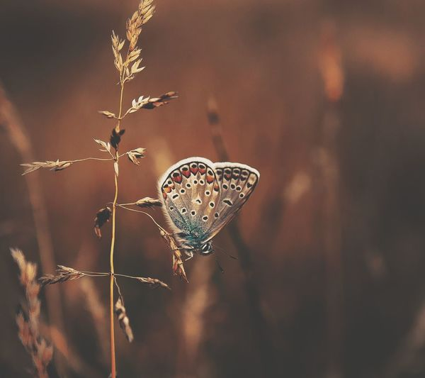 EyeEm Selects Insect Butterfly - Insect Close-up Animal Wildlife One Animal Cok