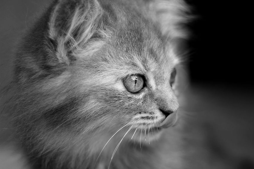 Bejo Black & White Animal Themes Black And White Blackandwhite Cat Cats Close-up Day Domestic Animals Domestic Cat Feline Focus On Foreground Indoors  Mammal No People One Animal Pets Whisker