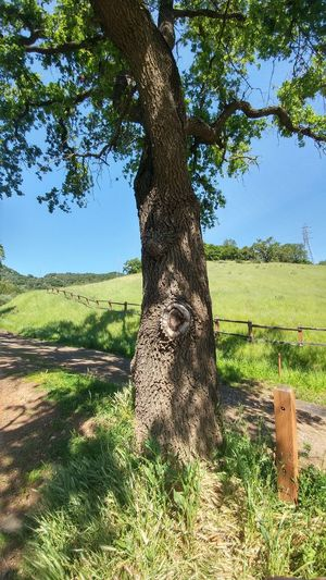 Tree Nature Day Landscape Sky One Animal Outdoors No People Animal Themes Mammal Oak Tree Beauty In Nature Tree Trunk Landscape_Collection Hillside Pasture Land