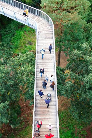 High Angle View Walking Person Large Group Of People Men Plant Growth Day Flower Journey Outdoors Green Color Vacations Nature Narrow Tourism Treetopwalk