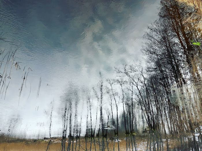 Q Reflection Reflection_collection Reflecting Water River Nature Nature_collection Naturelovers Nature_perfection Trees Tree_collection  Tree And Sky Clouds Vaidava Latvia Europe Upside Down Perfect Day Sky Beauty In Nature