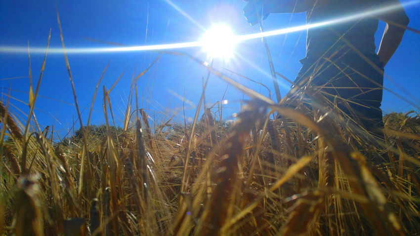 Fields Of Gold Check This Out Sunburst Beams Of Light Still Life BigSkyCountry Montanaphotography Portrait Of America