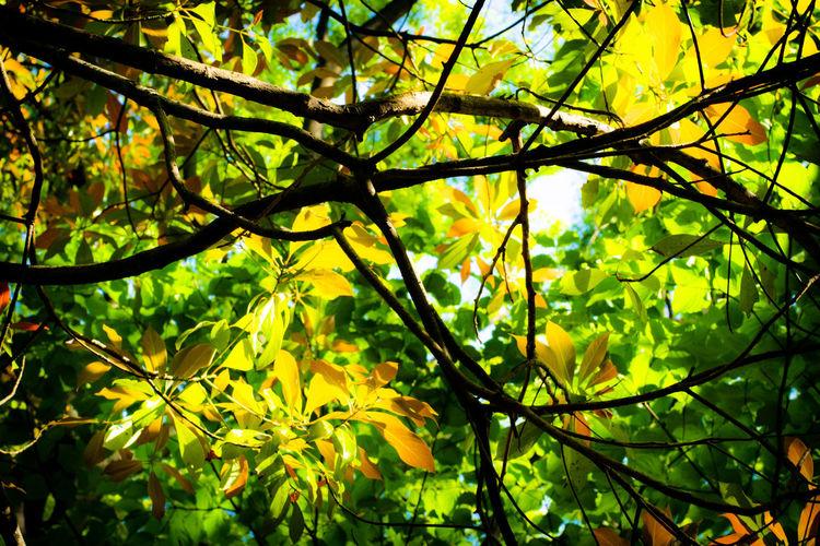 sommer leaves 2