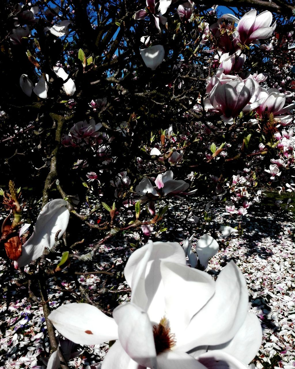 HIGH ANGLE VIEW OF WHITE FLOWERING PLANTS ON TREES