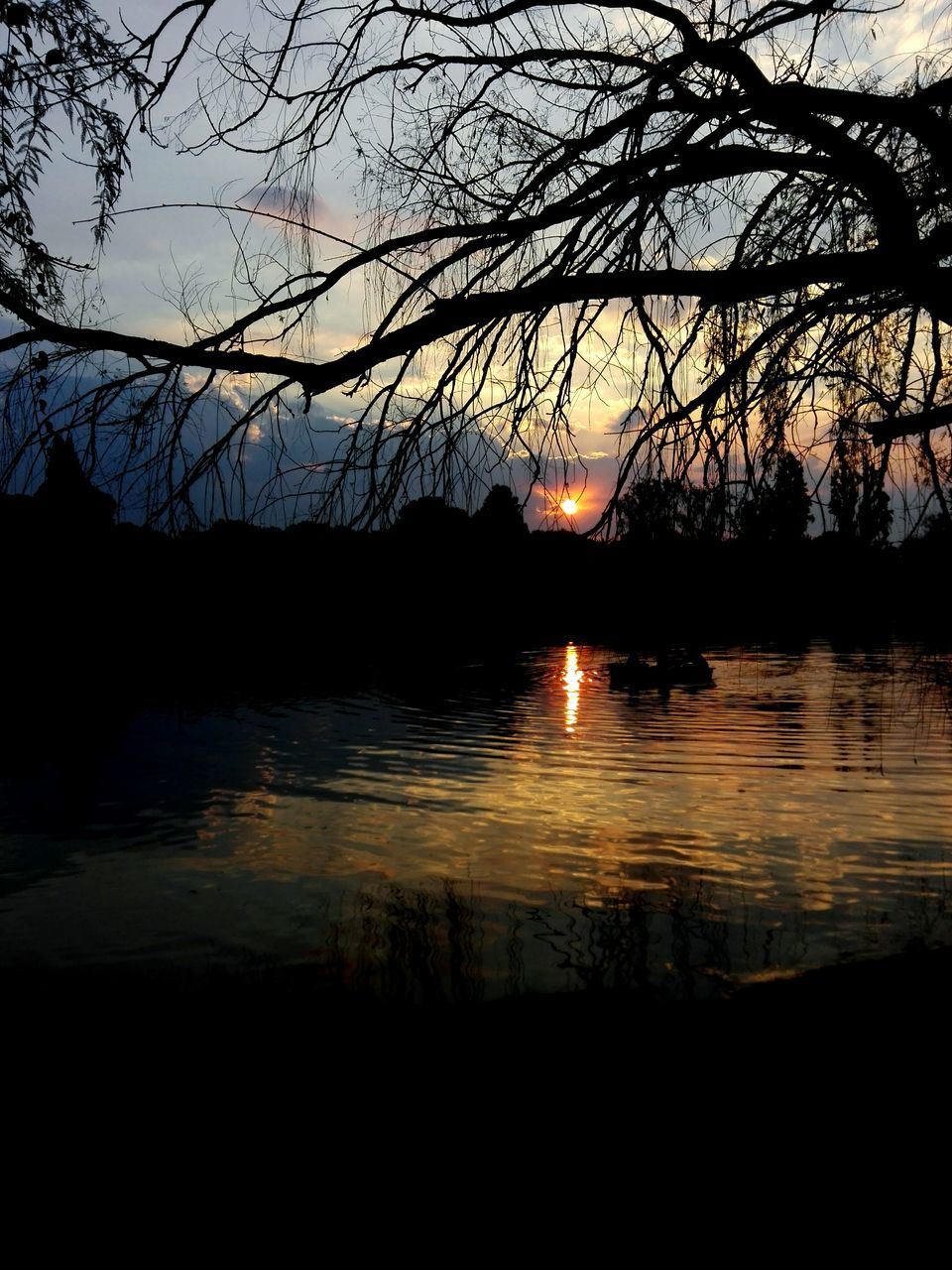 sunset, silhouette, reflection, tree, nature, beauty in nature, scenics, tranquil scene, water, tranquility, sun, lake, sky, outdoors, no people, branch, bare tree, day