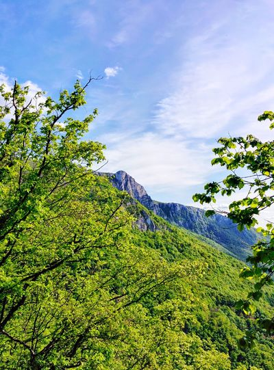 Serbia Mountains Mountain Landscape Nature Hiking Hikingadventures Miroc Djerdap Eastern Serbia Danube Danube River Green Trees Flowers Great Look Srbija