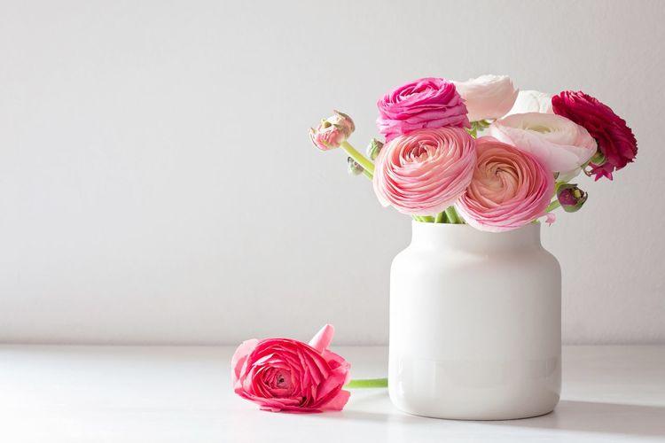 Beautiful bouquet of ranunculus Ranunculus Summer Celebration Springtime EyeEm Selects Flowering Plant Flower Plant Beauty In Nature Rosé Pink Color Freshness Vase Nature Table Flower Head Petal Close-up Fragility