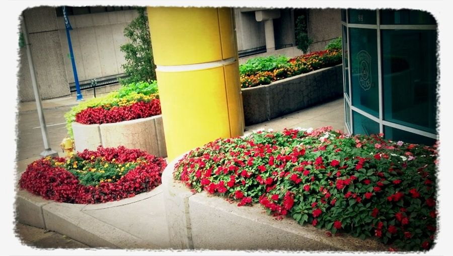 Props to #GRCC's Facilities staff for making the campus a beautiful place to work/learn