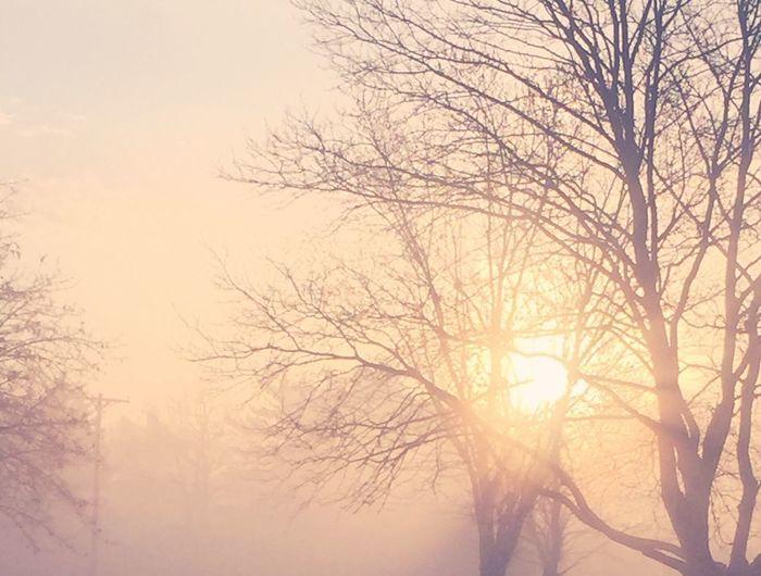 Pastel Power Landscapes With WhiteWall Sunrise Fog IPhoneography Misty Morning Sunrise at 7. IPhone 6+