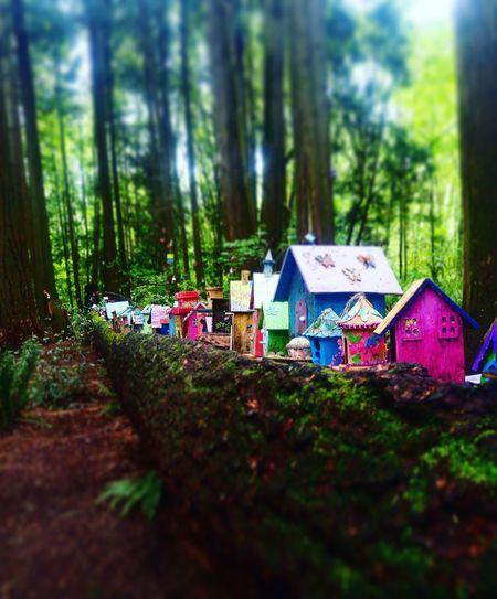 Fairy World Fairy Houses Redwood Park