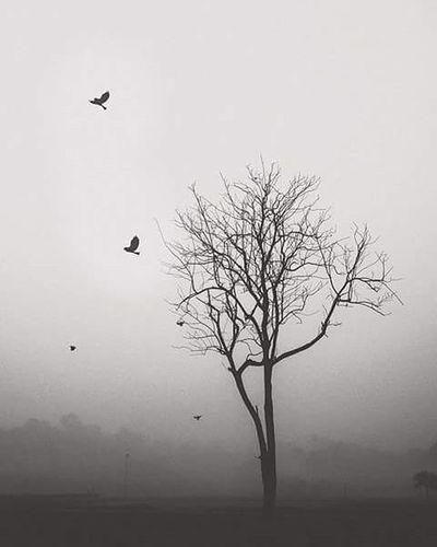 Dhakatales Dhakagram Fog Winter Birds Nature Trees Morning Bnw Bnw_captures Bnw_life Bnw_society Bnwphotography My_daily_bnw Photoftheday Photographyislife Photography Photographer Fujifilm Photographersofbangladesh Pob_bnw Instadhaka Instagood Instagram Everydayeverywhere adayatearth