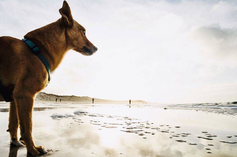 Dog standing on beach against the sky