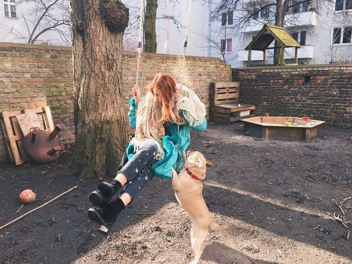 Young Adult Playing Having Fun Tree Long Hair Outdoors Dog Pet Domestic Animals Pug Swing