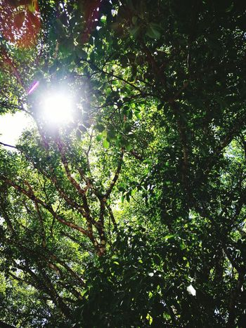 Nature Trees And Sun Beutiful