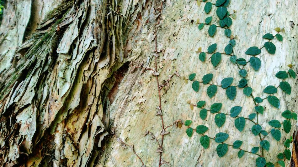 Full Frame Textured  No People Pattern Outdoors Backgrounds Close-up Day Tree Nature Roots Of Tree Textured  Trunck Textured  Aged Green Color Growth Beauty In Nature Hong Kong Tranquility Freshness Plant Leaf
