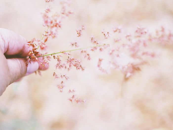 Grass pink Medow Flower Background Texture Blurred Background Blur Human Hand Flower Tree Nail Polish Pink Color Close-up Cherry Blossom Blossom