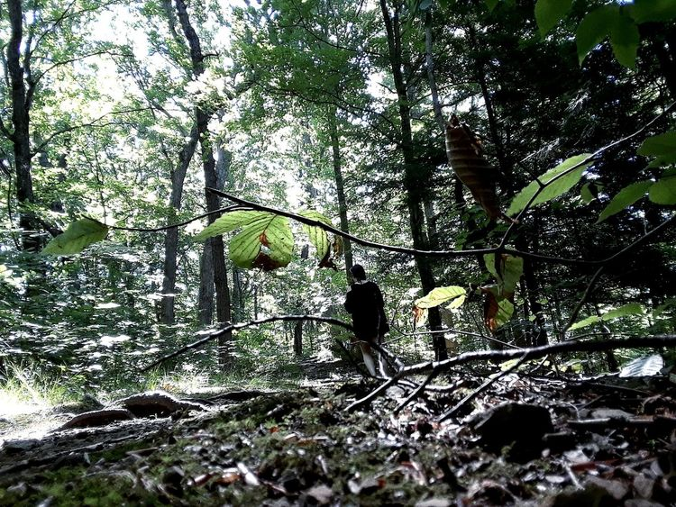Low Angle View Tree Growth Nature Outdoors Forest Relaxation Ohio Leisure Activity Mohican Tranquility One Person