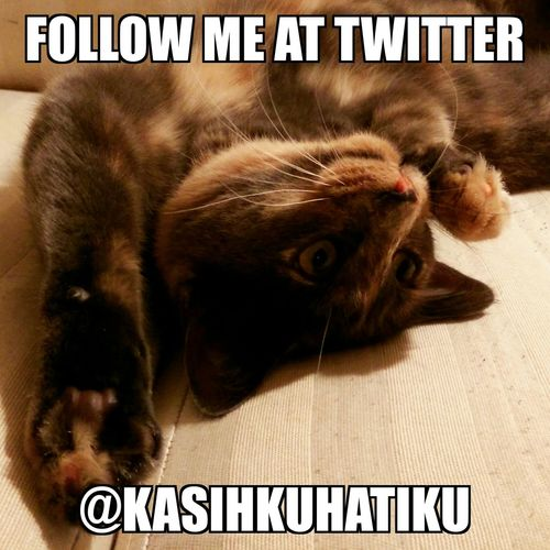 Follow them at twitter @KasihkuHatiku Catlovers Cat Mainecoon Twitter