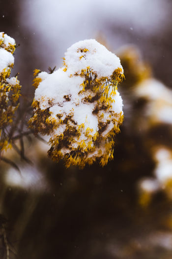 Winter Snow Close-up Cold Temperature Day Nature No People Plant Beauty In Nature Growth Outdoors Focus On Foreground Selective Focus Frozen Tranquility Tree Land Covering White Color Lichen