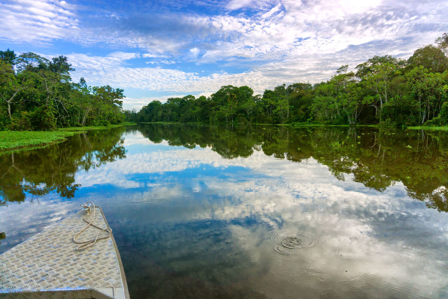 Front of a boat on a river in the Amazon Rain Forest near Iquitos, Peru Amazon Amazonas Amazonia Conservation Forest Iquitos  Jungle Landscape Nature Outdoors Peru Plant Rain Rainforest Reflection Rio River Scenics Tourism Travel Tree Vegetation Water Wild Wildlife