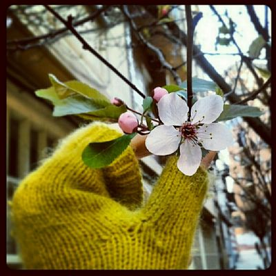 here comes the spring....